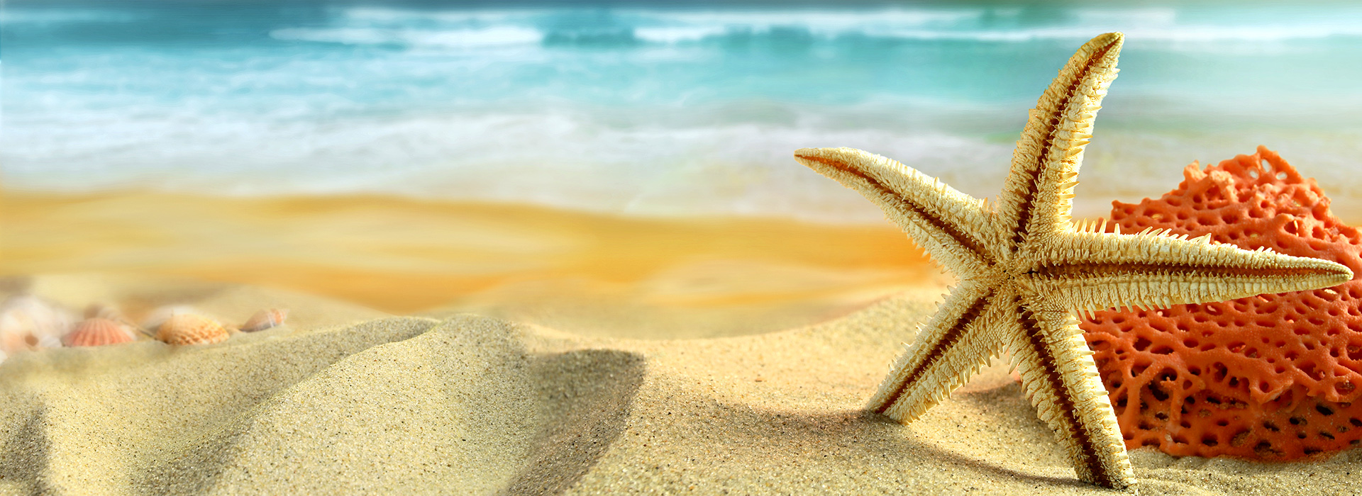 beach-sand-starfish-shells