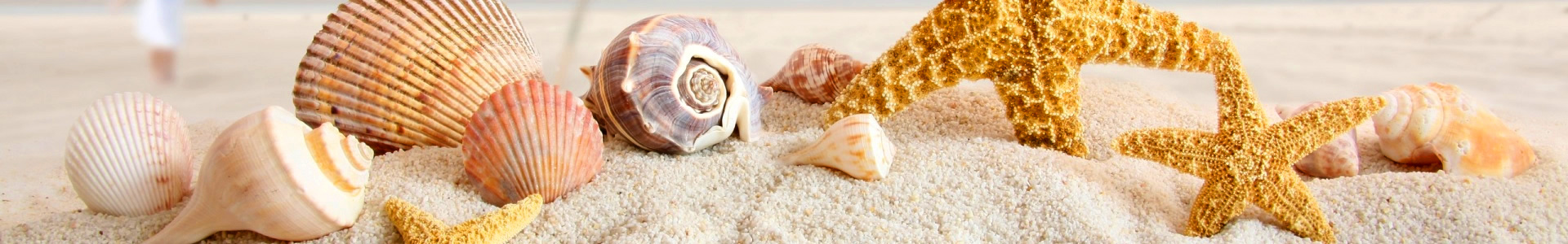 summer_sea_shells-hr